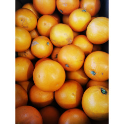 """2 kg ORANGES  SANGUINE BIO """"tarot"""" origine Sicile"""