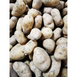 Pommes de terre nazca