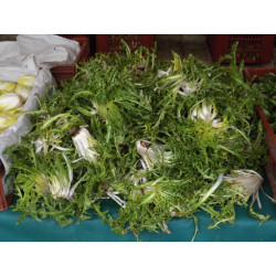 Pissenlits verts 250 g