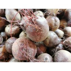 1 kg de betteraves CRUES de notre production sans traitement