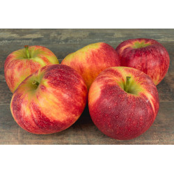 """1 kg de Pommes """"ELSTAR"""""""