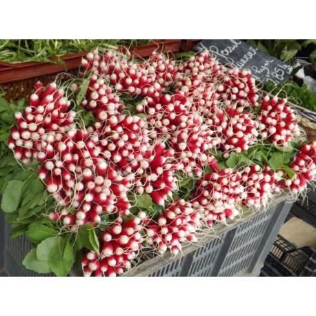 promo  2 bottes de radis roses