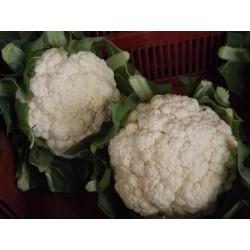 1 gros Chou-fleur de notre production sans traitements