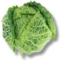 1 Chou Vert frisé de notre production sans traitements