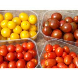 250g  Mélange de tomate cerise DE NOTRE PRODUCTION  SANS PESTICIDES