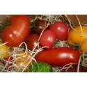 1 kg Mélange de tomates variétés anciennes de notre production SANS PESTICIDES