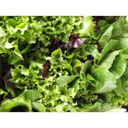 500 g Mesclun (jeunes pousses de salades) de notre production sans traitement