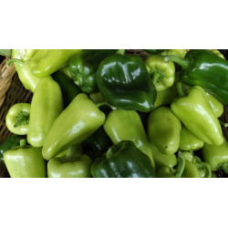 500g poivrons verts/verts clairs DE NOTRE PRODUCTION