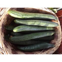 Concombre long DU JARDIN  (la piéce)