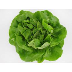 1 Laitue Verte de notre production sans traitement