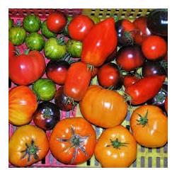 500g Mélange de tomates variétés anciennes de notre production SANS PESTICIDES