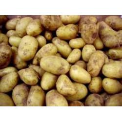 """2 kg de POMMES DE TERRE """"CHARLOTTE"""" de notre production sans traitement"""