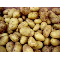 3 kg pommes de terre  CHARLOTTE (chair ferme)  DE NOTRE PRODUCTION sans traitement
