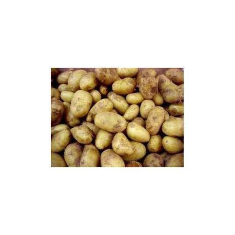 PROMO  3 kg pommes de terre CHARLOTTE (chair ferme) moyennes DE NOTRE PRODUCTION