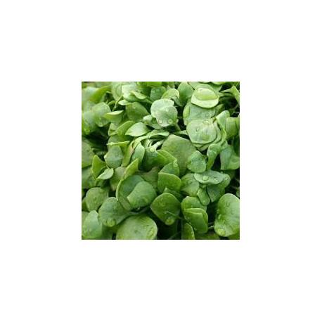 250g  de POURPIER d'hiver (salade) de notre production sans traitement