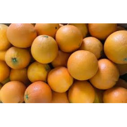"1 kg Oranges de table  BIO ""NAVEL"" cal 5/6 origine SICILE sans traitement"
