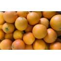 2 kg oranges A DESSERT origine SICILE sans traitement