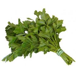 1 bouquet de Persil Plat de notre production
