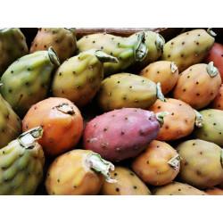 1 kg de FIGUES DE BARBARIES BIO de Sicile