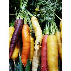 1 Botte de carottes multicolores de notre production sans traitement
