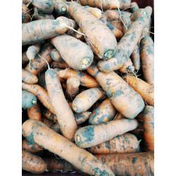 2kg  Carottes  de notre production sans traitement