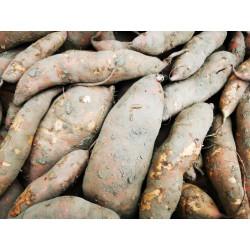 1 kg de PATATES DOUCES de notre production sans traitement