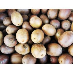 1 kg de KIWIS JAUNES direct producteur du sud ouest